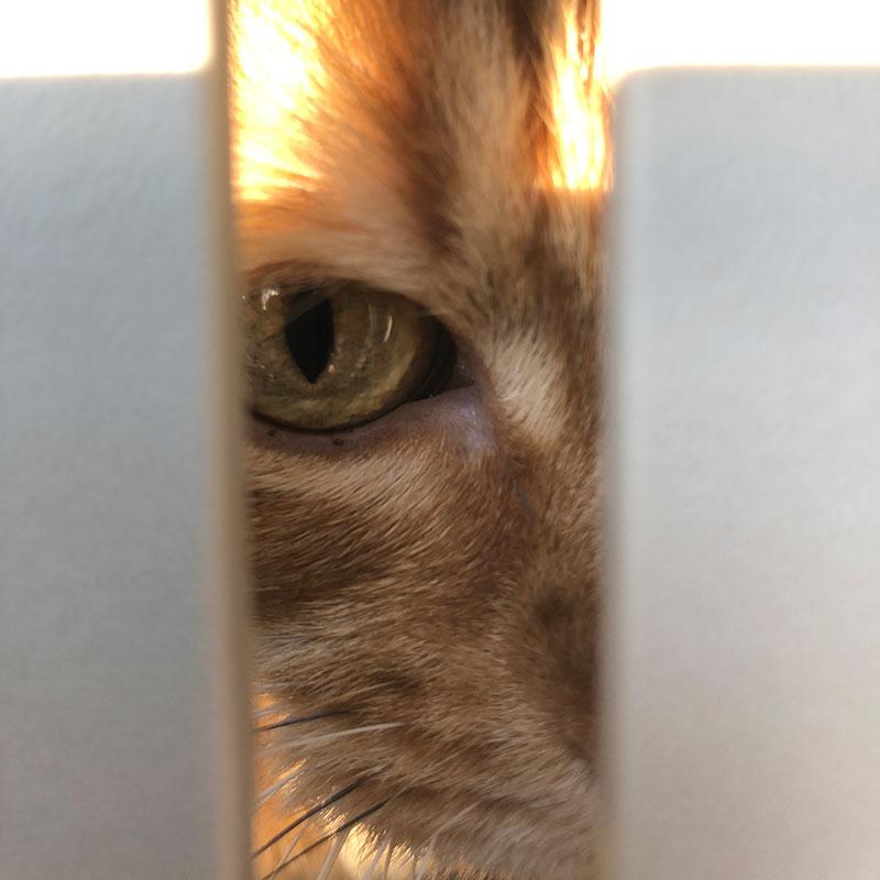 Alf keeping an eye on everything