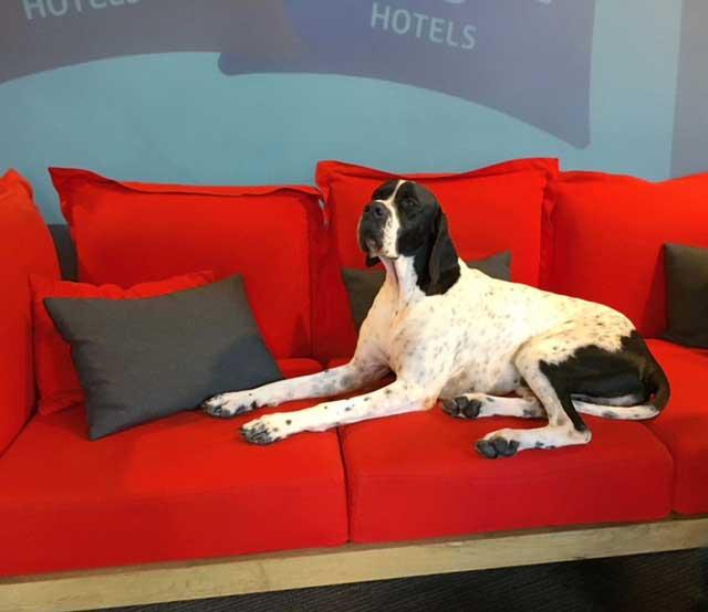 Stunning hound Sting