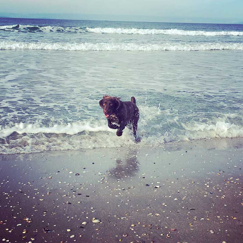 Seth's owners sent these lovely photos — Seth in the surf