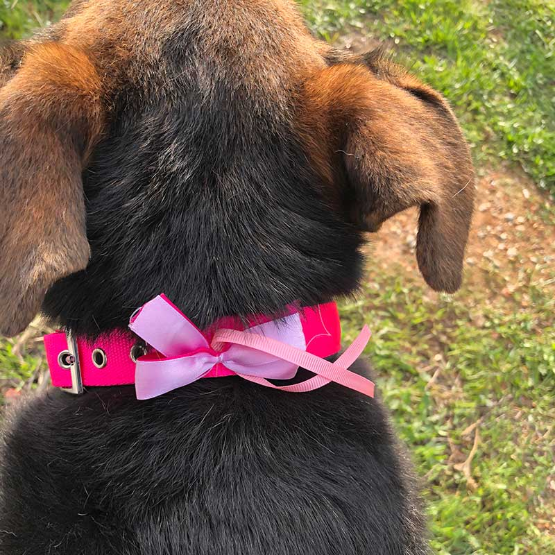 Myrsine sporting a beautiful 'going-away' bow. Martha makes one of these bows for every dog who leaves the shelter.