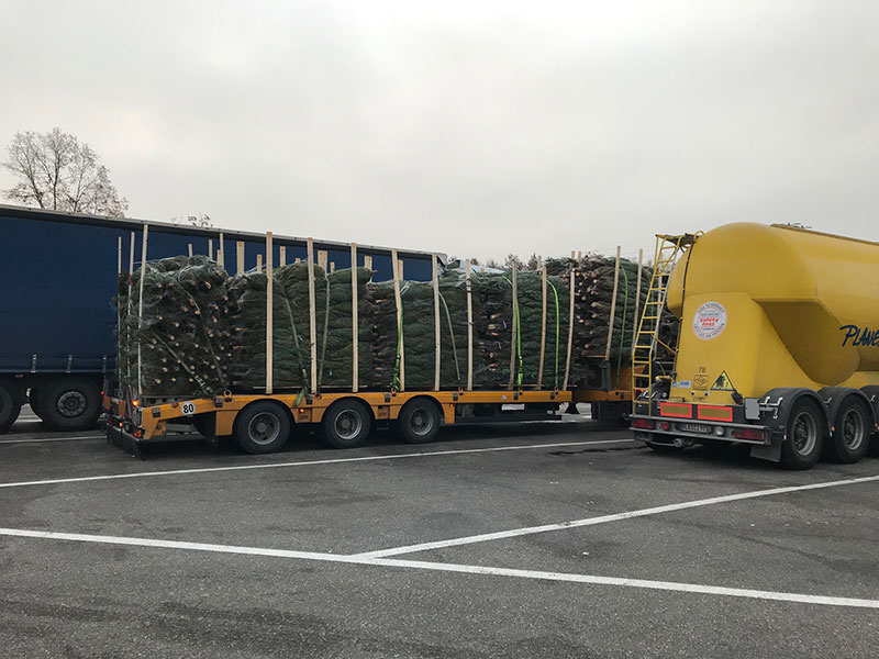 A clue that the holiday season is almost upon us — a major transport of Christmas trees in Germany