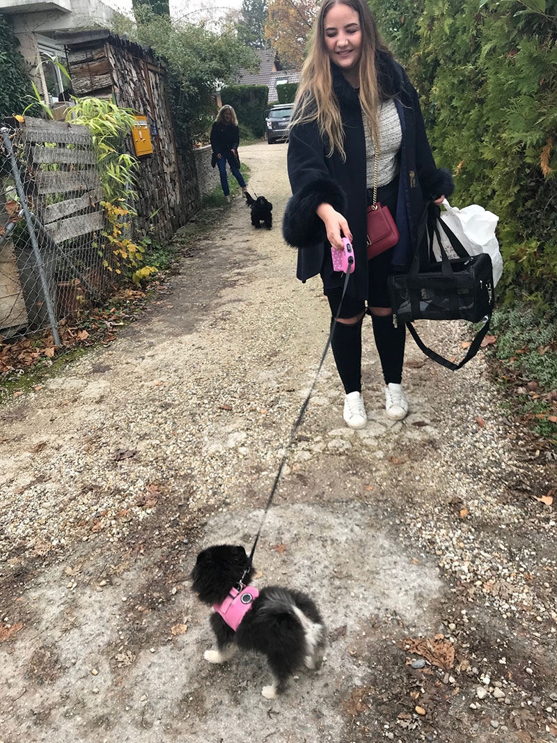 Panda arrives to join the trip. Note her matching harness and lead!