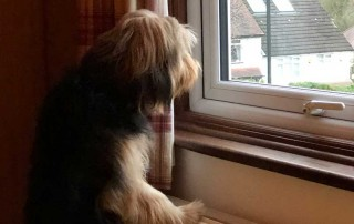 Bailey showing off her Neighbourhood Watch skills — or perhaps just thinking it's time for a walk in the park
