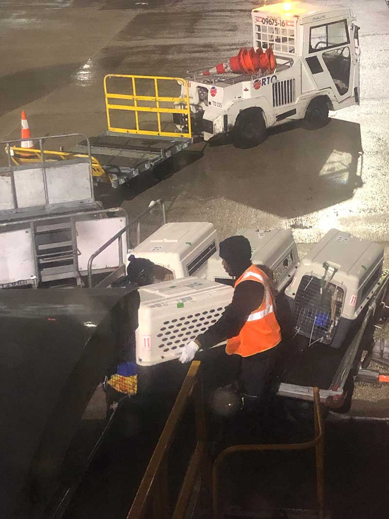 We watched as our passengers were unloaded from the plane at Charles de Gaulle. Courier Paul met us at the airport on his way back from collecting pets in Switzerland and France, and we travelled together by road to the UK.