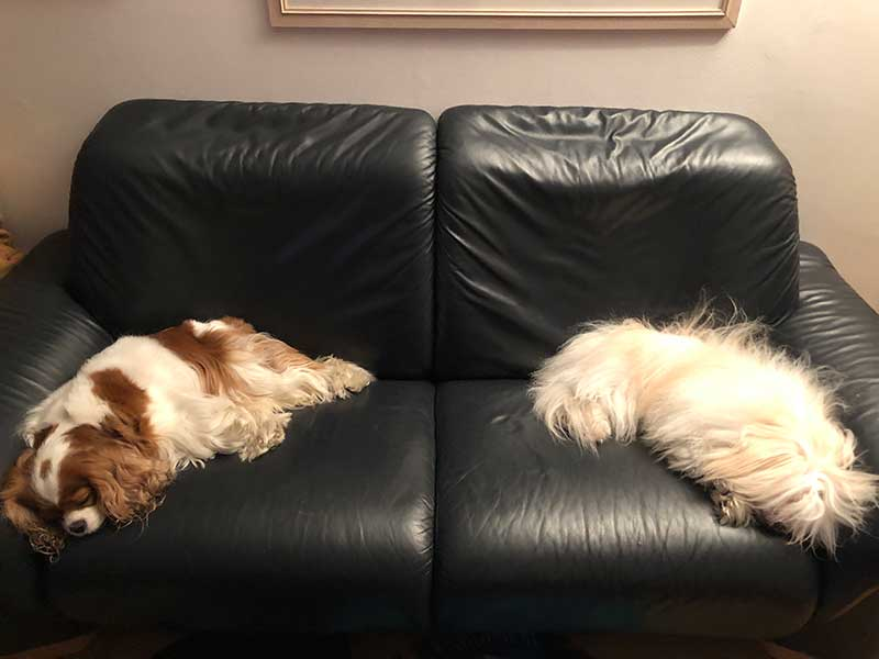 The two dogs were perfect houseguests!