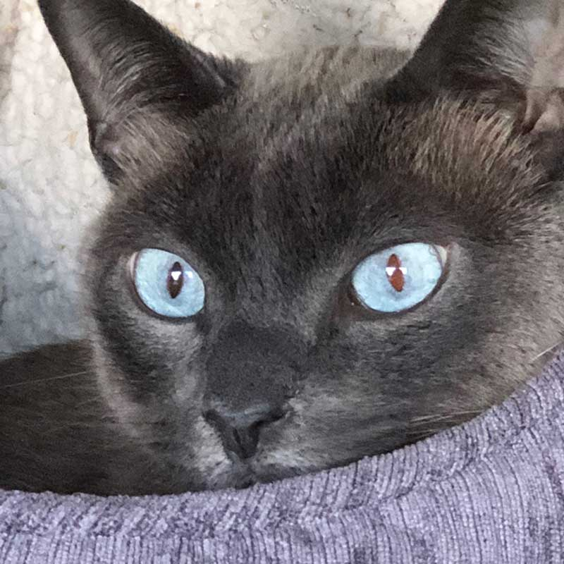Miro has captivating blue eyes