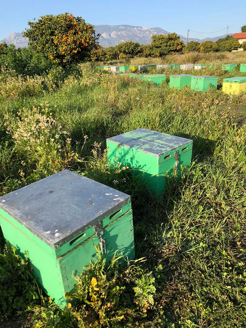 Beehives in among fruit trees near Korinthos