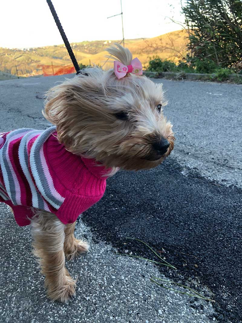 The wind didn't do too much for Chloe's coiffure, but her very smart jumper kept her cosy