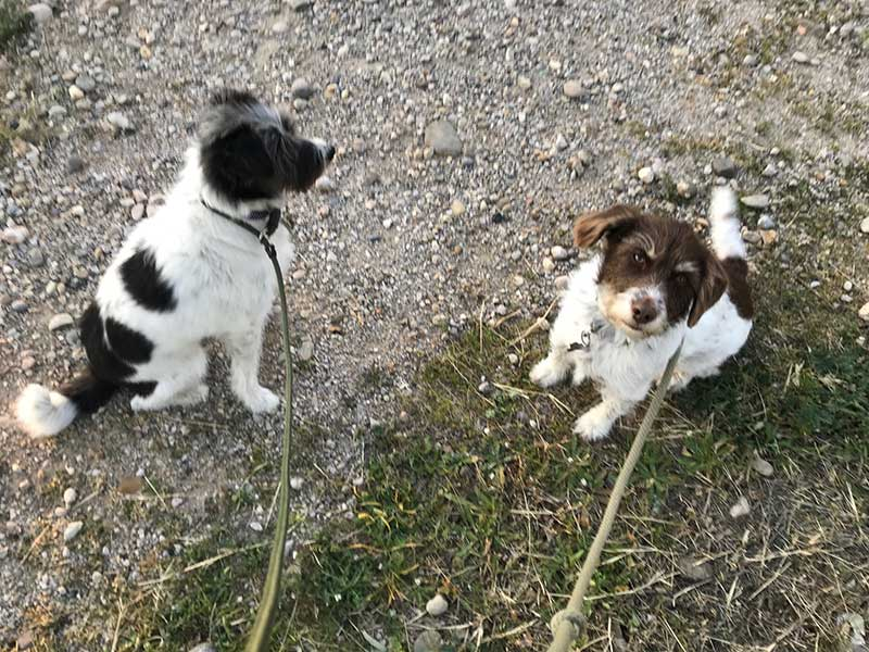 Indie and Rosa enjoying a walk