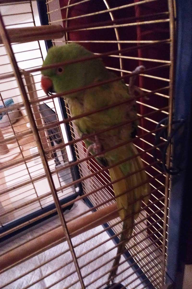 Fine feathered fellow Filbert