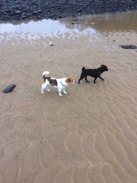 Gwen and Titan enjoying the sea at Rifle Range Beach