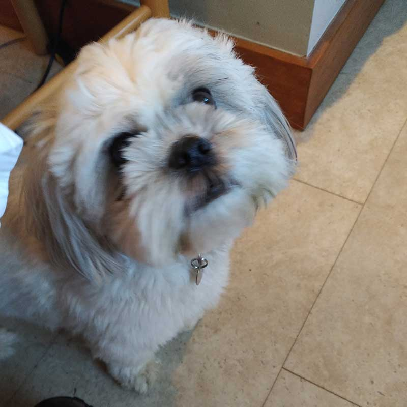 Doggy PR guru Winston