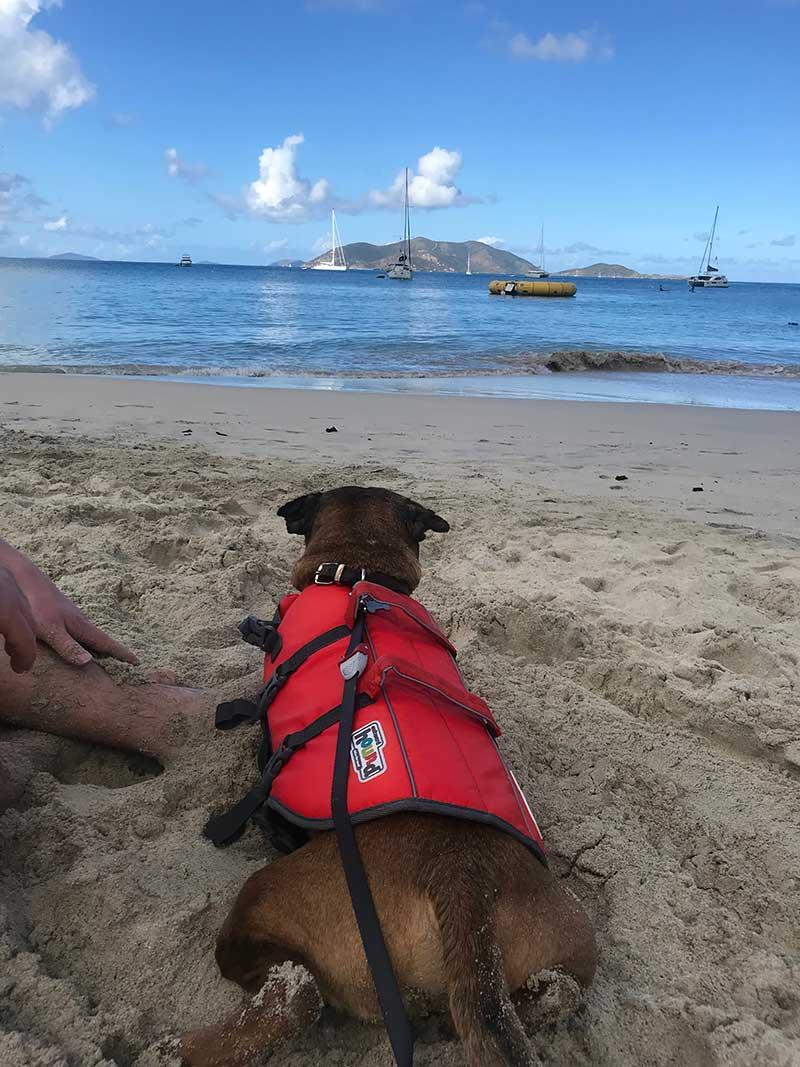 Rudy on the beach