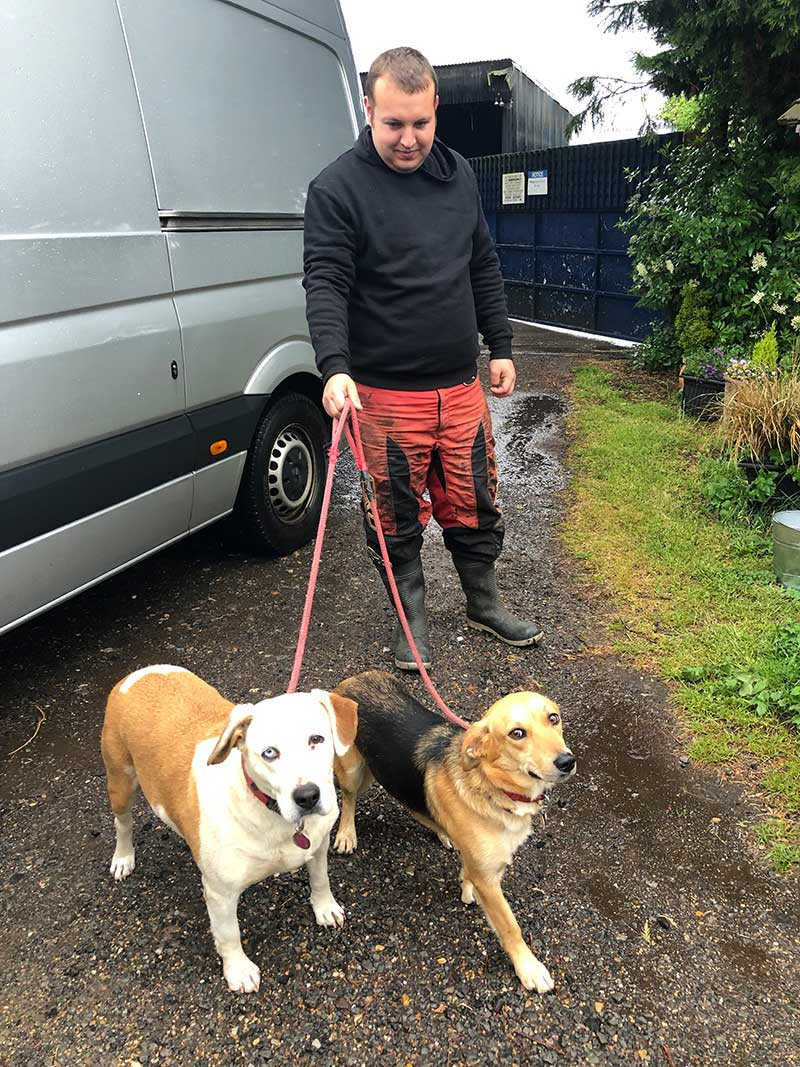 We delivered Daisy and Abby to Kilconnel Kennels [http://www.kilconnelkennelshenton.co.uk/home/] in Oxfordshire, where they'll stay until Anne and Fred catch up with them. Here you can see Abby's marvellous eyes — one blue and one brown.
