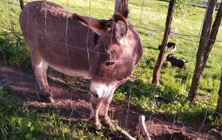 Greetings from a donkey as we drove up to our hotel in Chaumont