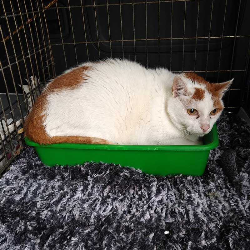 Bianco preferred to travel in her (clean) litter tray. At 18 years old, this senior sweetie has the right to do pretty much whatever she likes!