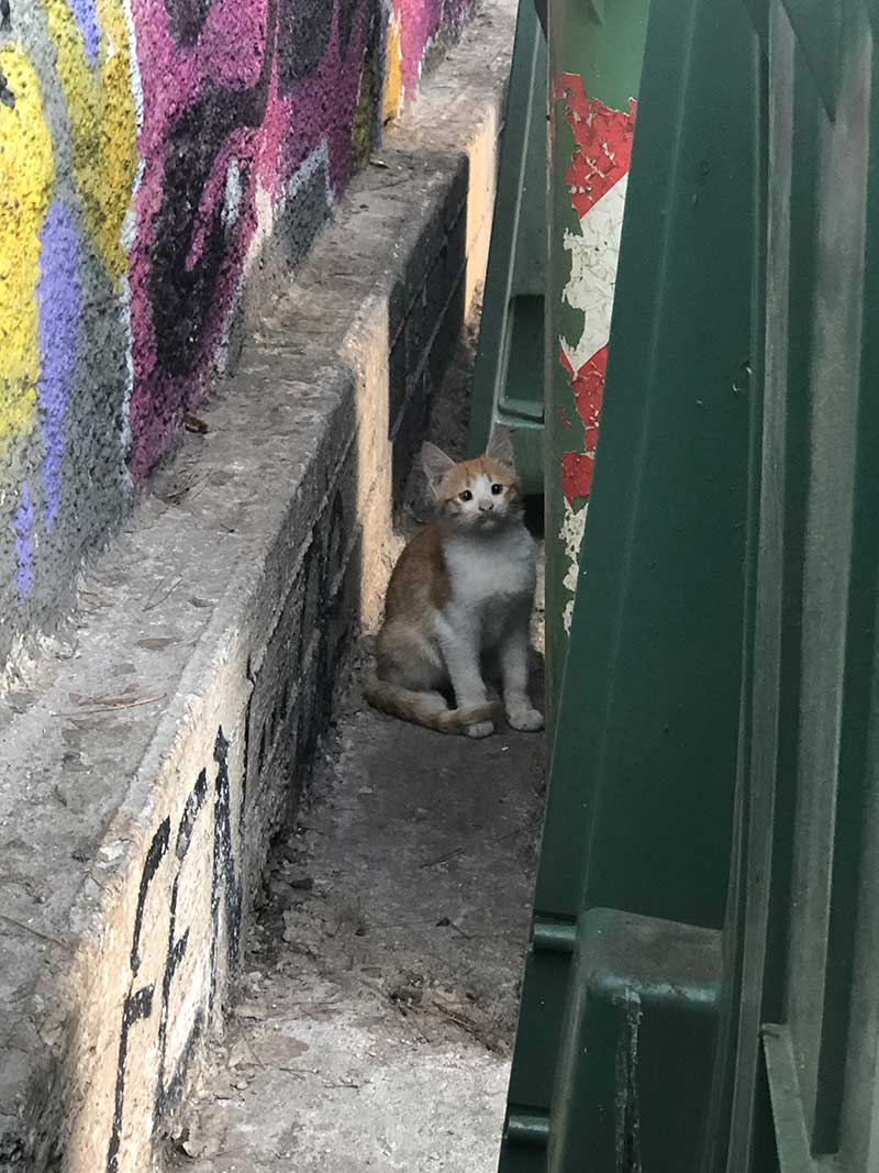 At our hotel in Athens, a new litter of stray kittens had appeared since the last time we stayed. This little one soon caught on to the idea of sharing bits of our breakfast.
