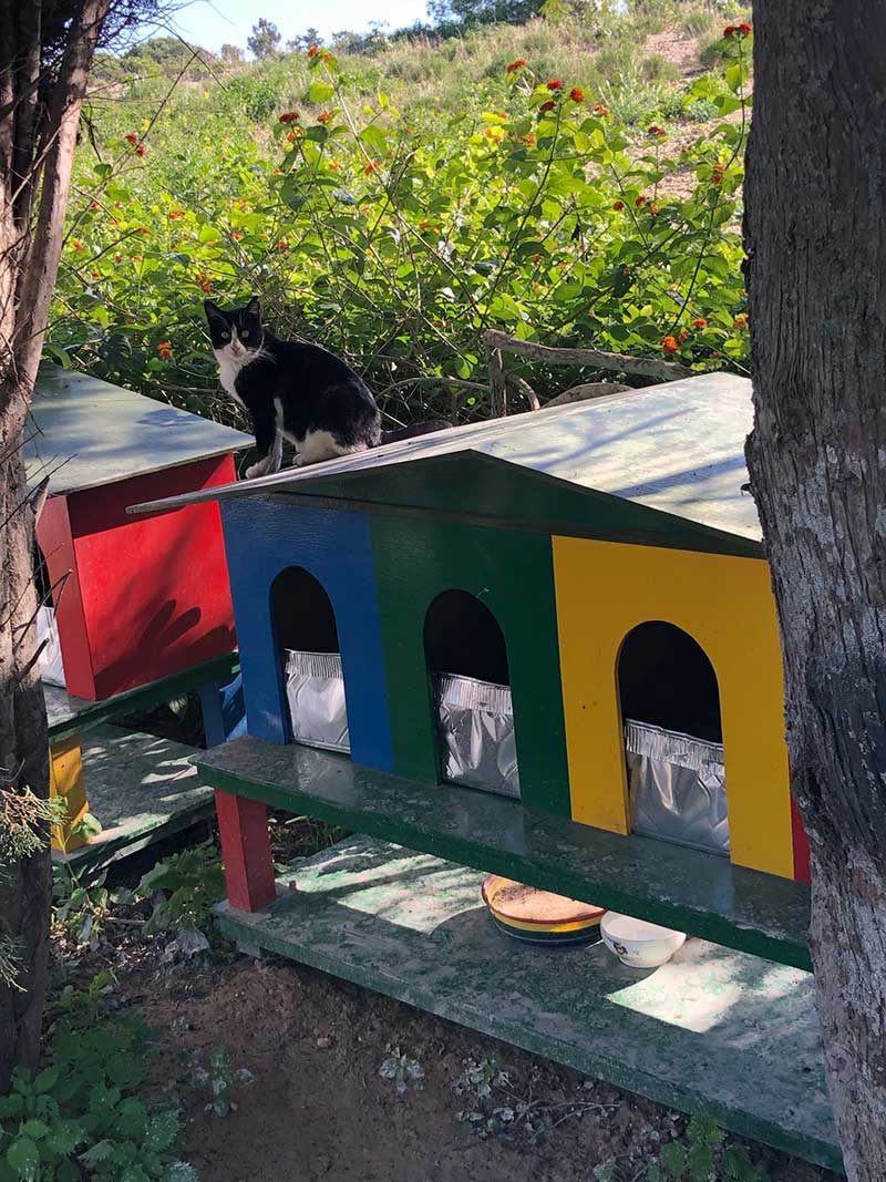 Cat houses on the edge of Ta'Qali park, Malta's national park. It's a very smart village for stray cats, with CCTV surveillance.
