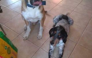 Oscar (L) and Clara (R)