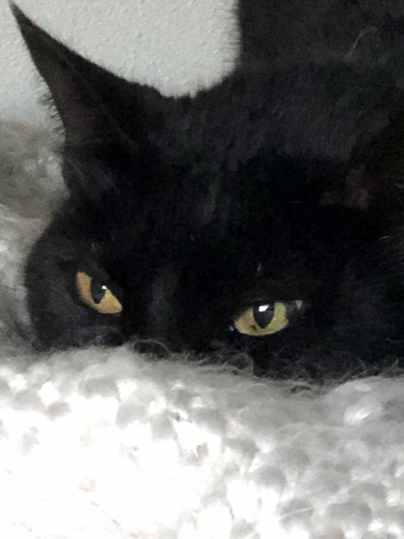 ...slinky black puss Serra
