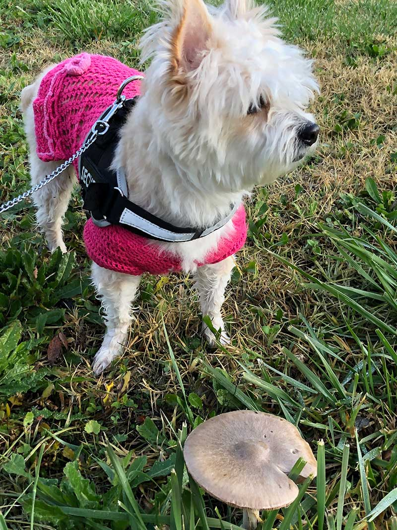 Nina doubtless glad of her smart pink jumper on a chilly morning walk