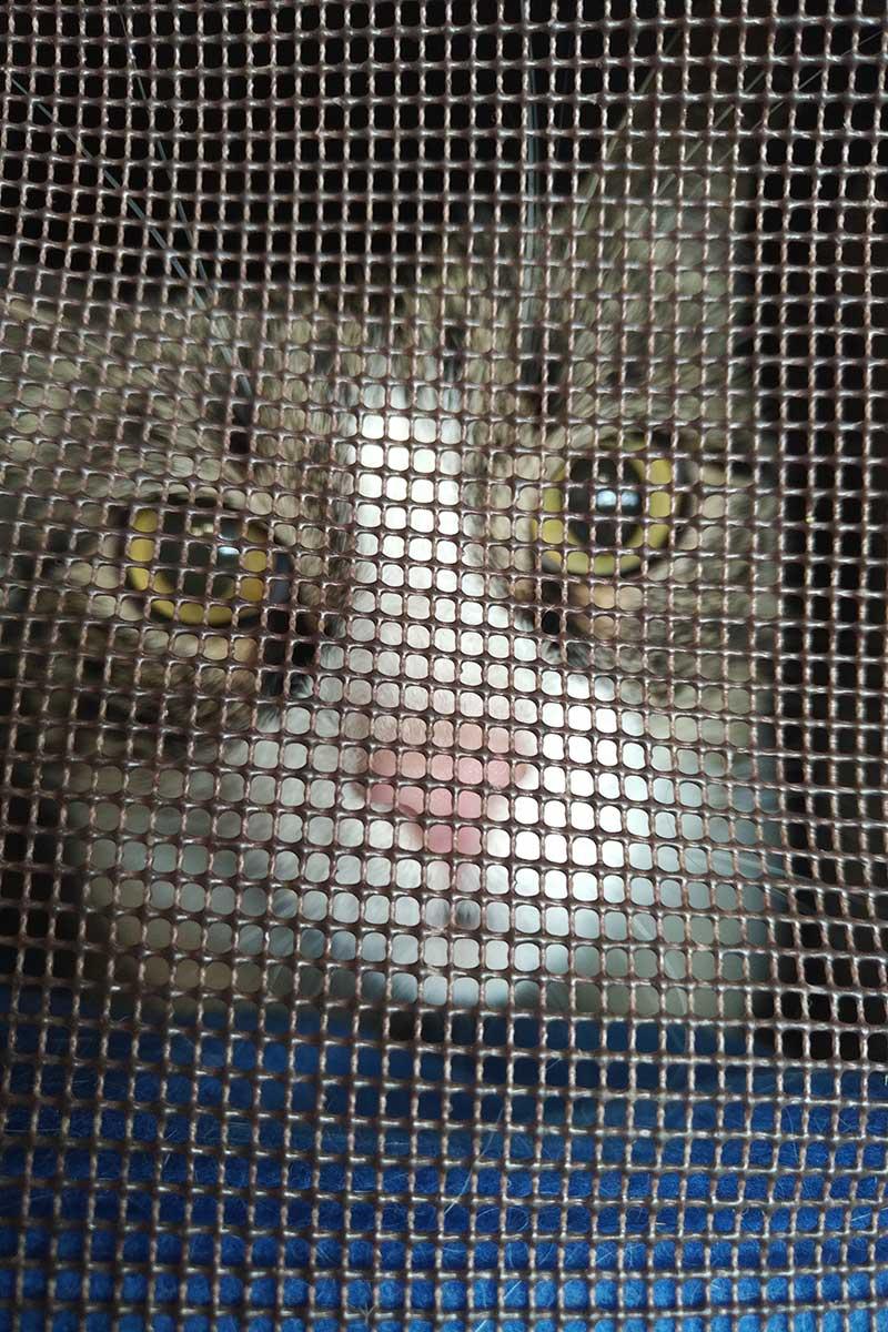 Wide-eyed Sammy