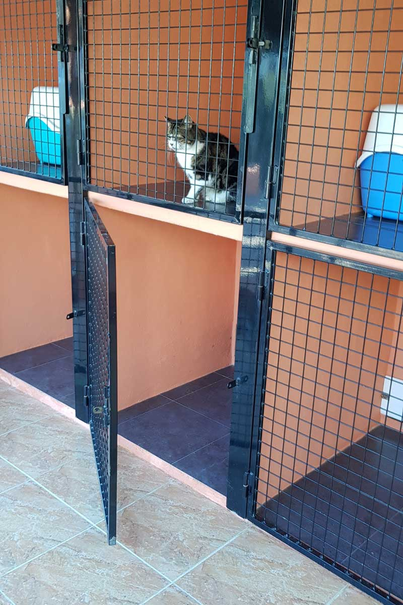 The FAB Cattery was exactly that — fab! With heated bedrooms and outside runs.