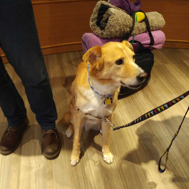 Delightful hound Parker