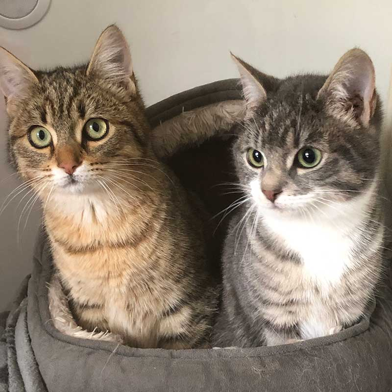 Maisie (L) and Dolly (R) — what a delightful duo!