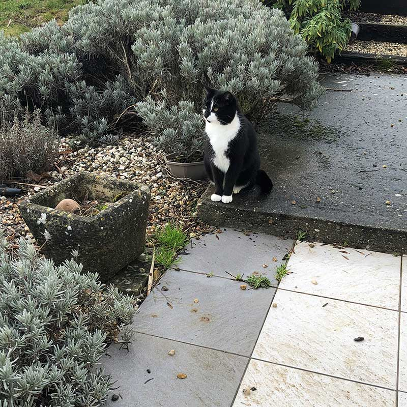 ...as does this charming black-and-white puss, who belonged to the previous owners of the house. When they left, they rehomed him to a neighbour, but one day Loree came home to find he'd moved back in. So she let him stay!