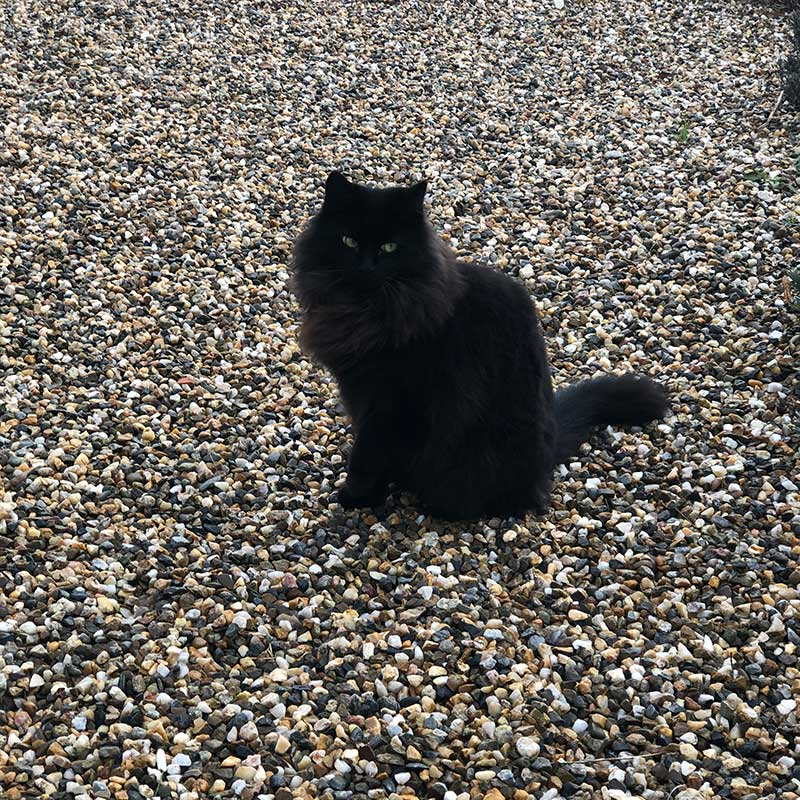 This splendid black floof resides at James and Loree's French home...