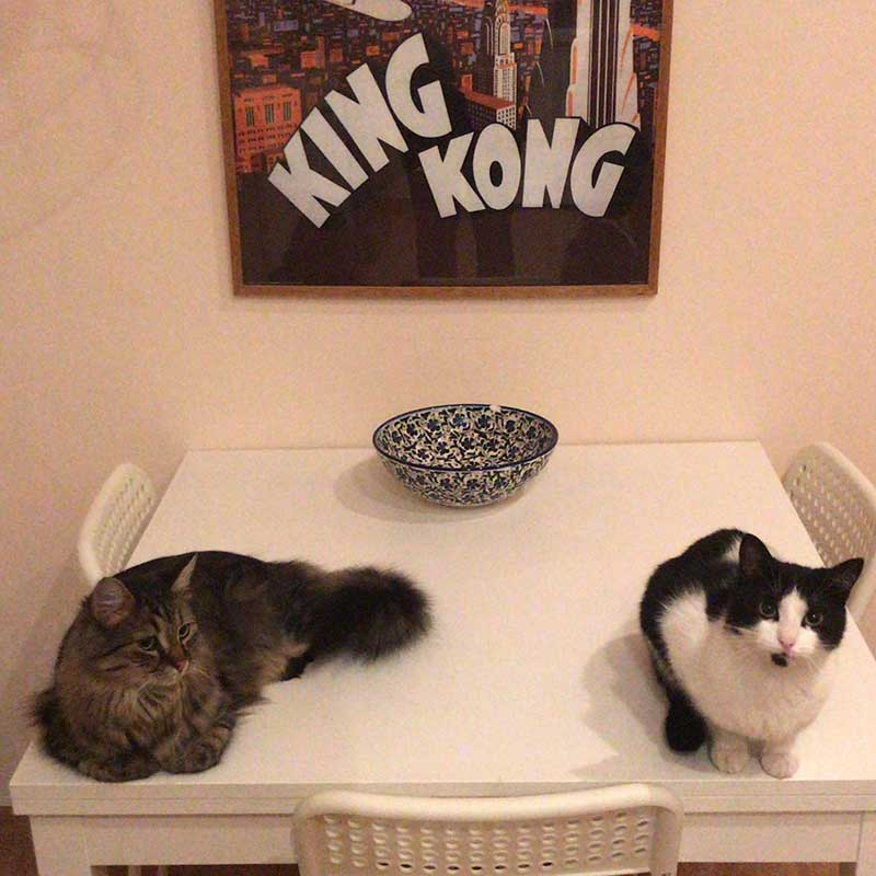 Channel hopping pets : Handsome tabby Zaul and stunning black-and-white Lyra