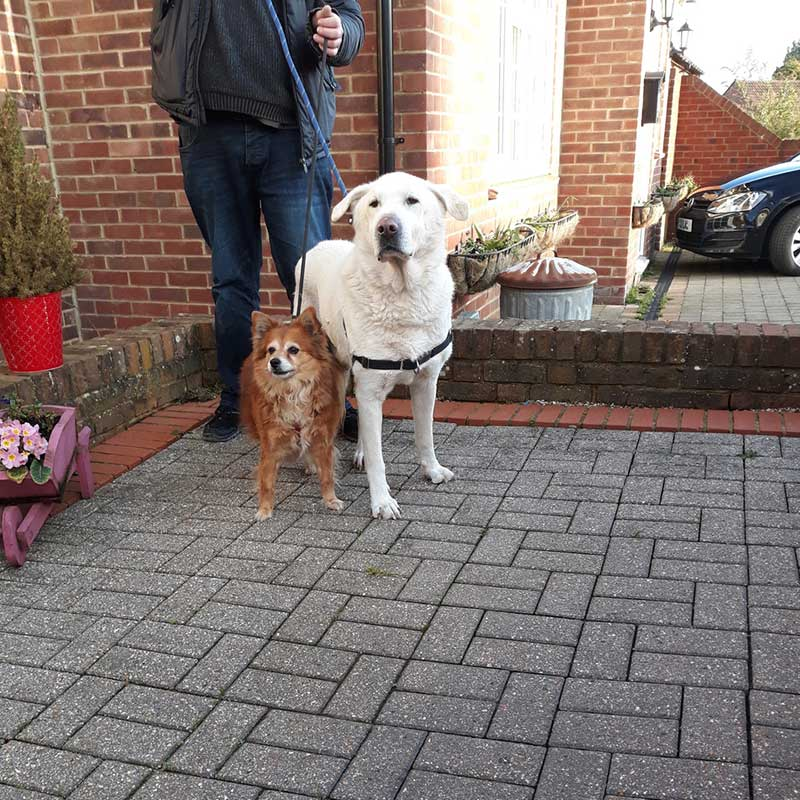 Despite the considerable difference in size, these two dogs are an inseparable pair who took all their walks together