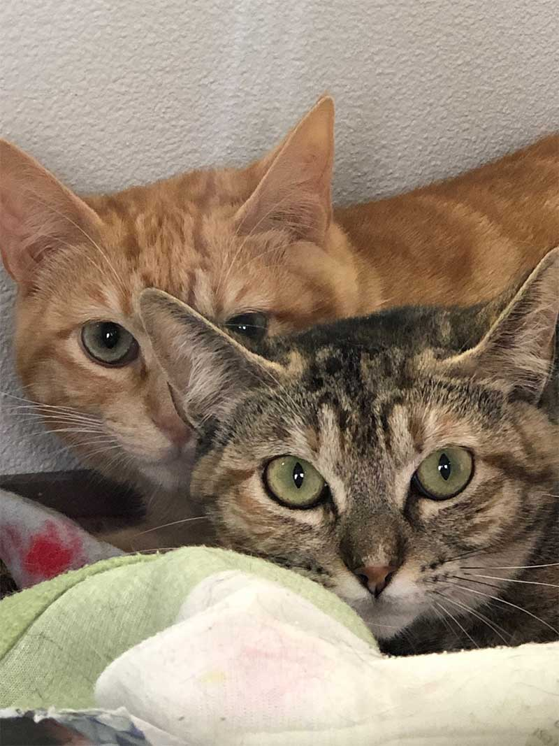 Delightful Benny and Sophie, a very bonded pair