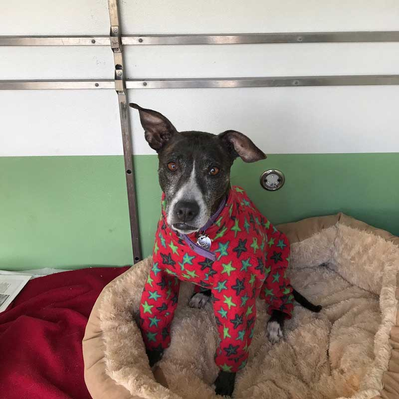 Audrey came equipped with a very snazzy pair of PJs!
