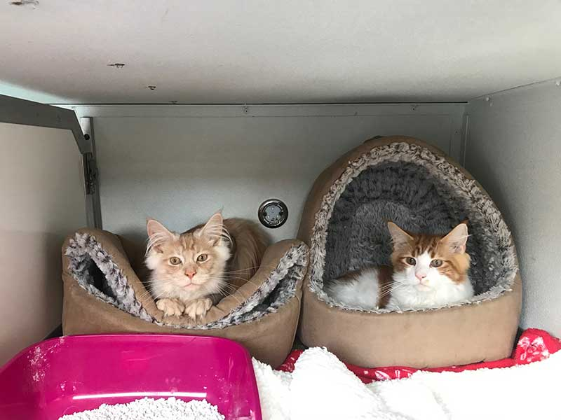 Giorgos and Splodge, each taking his own approach to using the cat igloo!