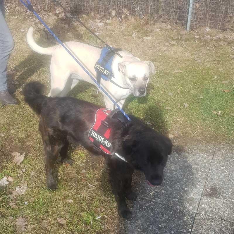 Both dogs loved their regular walks