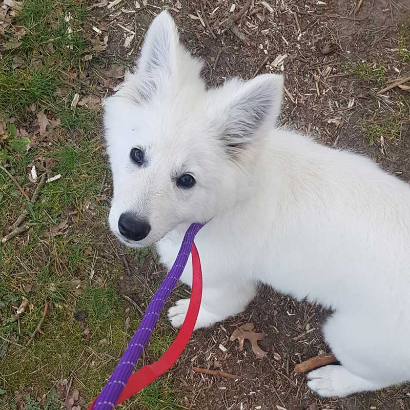 Super pup Theia
