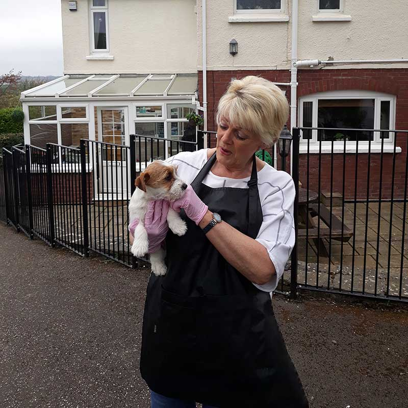 Jen delighted to receive her new puppy Crumble in Devon