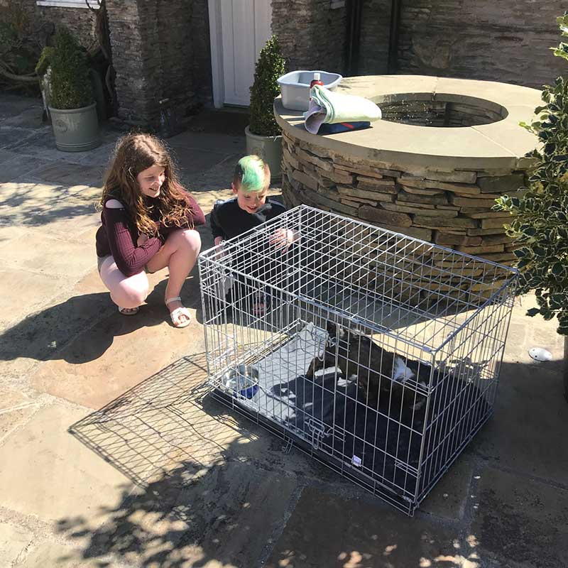 Six Tibetan Terrier puppies : The Woods family in Nottinghamshire take delivery of new puppy Tig