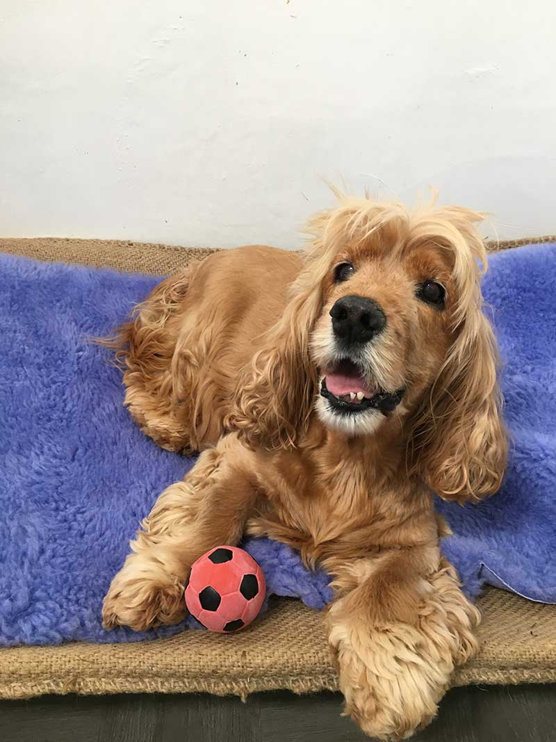 Pets in the air : Adorable Toby looking very relaxed in kennels