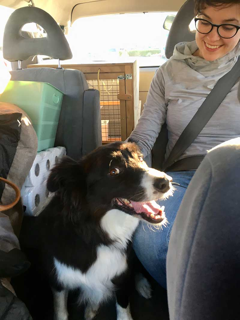 "Molly happily on her way home. Stacey wrote to say: ""Molly arrived safe and sound and seems to have travelled well. She was very excited to see us! Huge thank you for all your help in making it come together."""