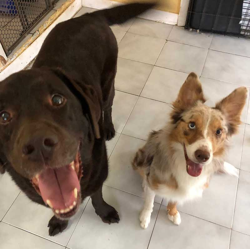 Pets in the air : Rocky homeboarding for a week with Rio. Looks like they had fun together!
