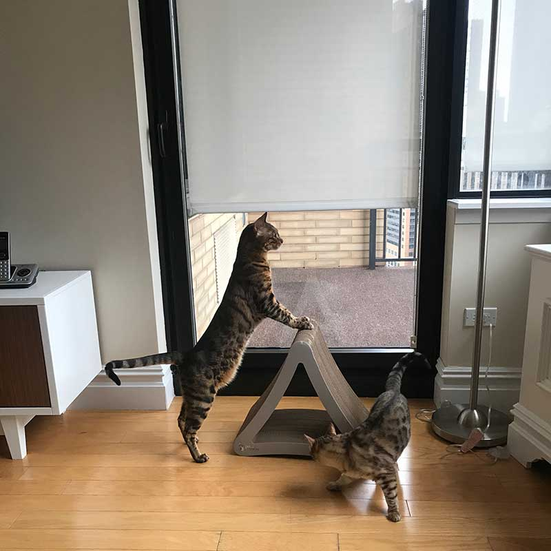 Repatriation flights : Opal and Onyx exploring their New York home