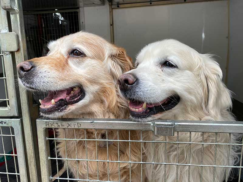 Here are Capo and Bruno happy together. The bedrooms in our vans are all modular, so we can accommodate pets — even quite large dogs like these two — who prefer to travel together.