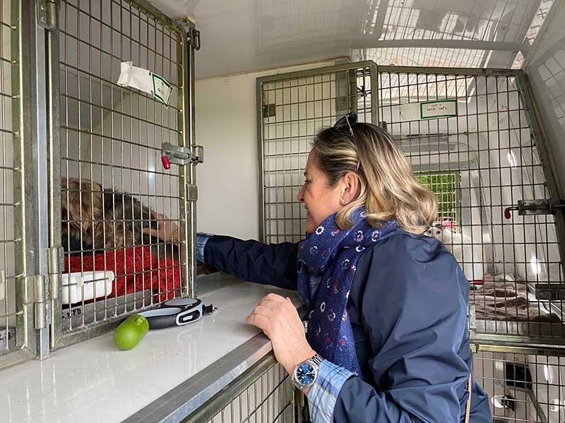 Pet travel trips : Louisa seeing the dogs away