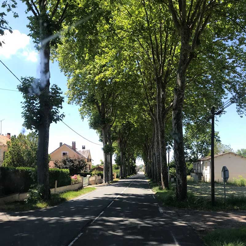 On the road : A classic tree-lined street in the Limousin