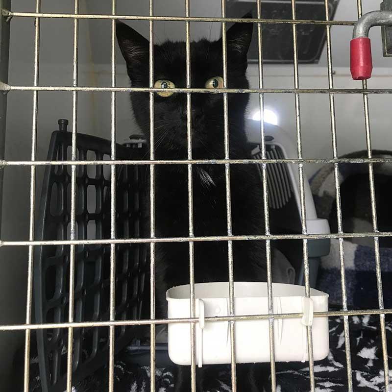 Slinky black puss
