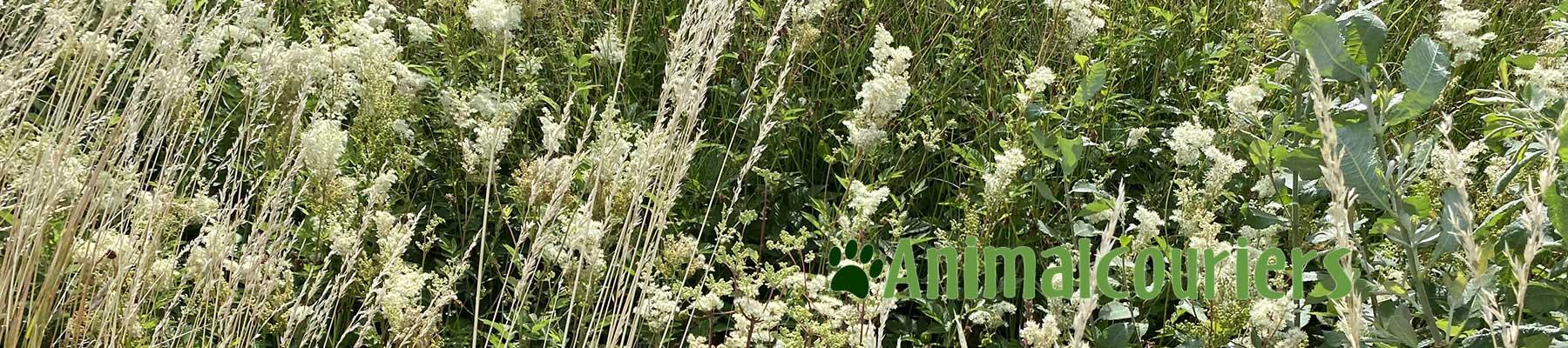 Scandinavian grasses