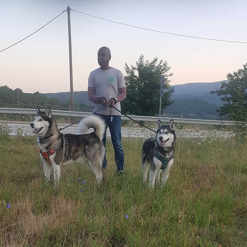 Pet passengers : Akasha and Merlin enjoying a walk with courier Ainslie